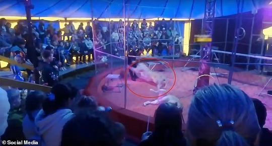Nghệ sĩ xiếc thú bị sư tử tấn công ngay trên sân khấu - Ảnh 3.