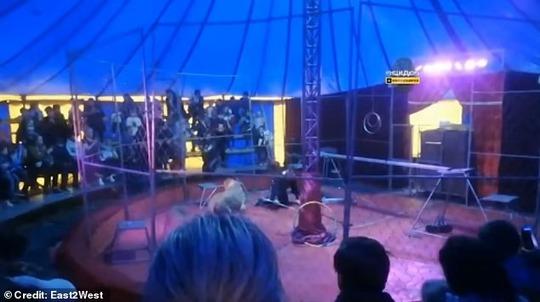 Nghệ sĩ xiếc thú bị sư tử tấn công ngay trên sân khấu - Ảnh 1.