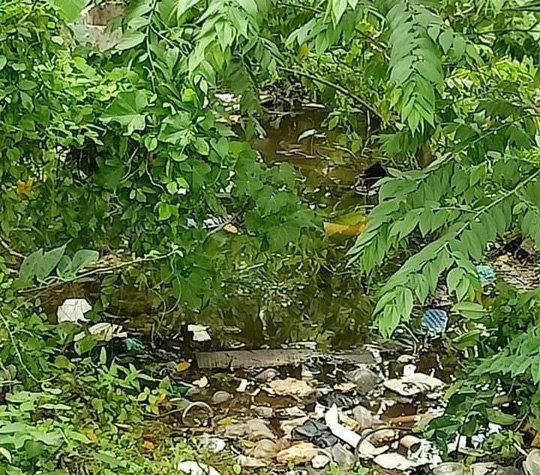 Tìm người thân thi thể người đàn ông nằm dưới rạch ở Phú Quốc - Ảnh 1.