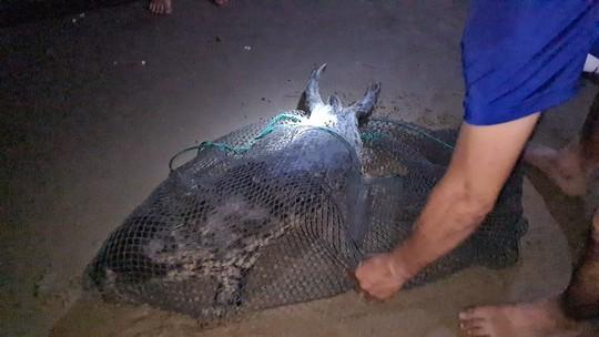 Hải cẩu quý hiếm bất ngờ xuất hiện ở biển Quảng Nam - Ảnh 3.