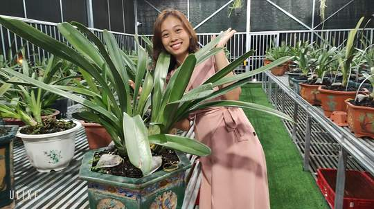 Bà chủ vườn lan trăm loài Thùy Linh chia sẻ bí quyết trồng lan - Ảnh 1.