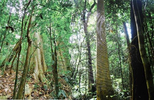 Khám phá vẻ đẹp siêu thực ở khu rừng cổ tích Bù Gia Mập - Ảnh 1.