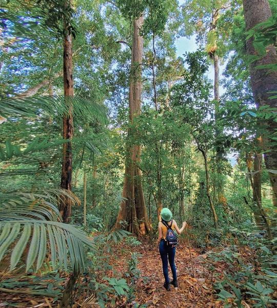 Khám phá vẻ đẹp siêu thực ở khu rừng cổ tích Bù Gia Mập - Ảnh 2.