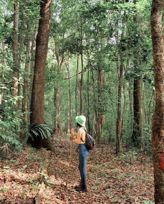Khám phá vẻ đẹp siêu thực ở khu rừng cổ tích Bù Gia Mập - Ảnh 3.