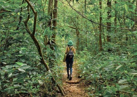 Khám phá vẻ đẹp siêu thực ở khu rừng cổ tích Bù Gia Mập - Ảnh 4.