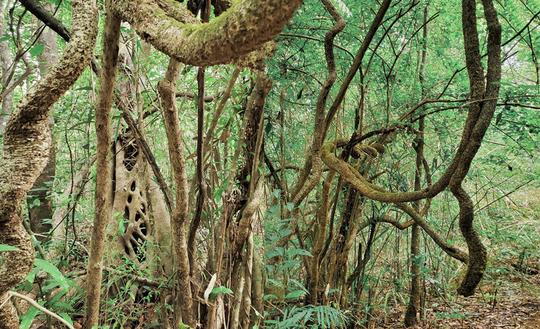 Khám phá vẻ đẹp siêu thực ở khu rừng cổ tích Bù Gia Mập - Ảnh 5.