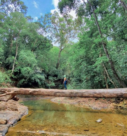 Khám phá vẻ đẹp siêu thực ở khu rừng cổ tích Bù Gia Mập - Ảnh 6.