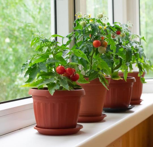 Cách tạo khu vườn bên cửa sổ - Ảnh 3.