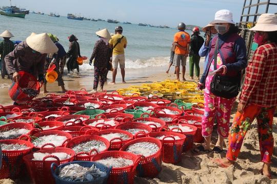 Ngư dân Bình Thuận trúng mùa cá cơm - Ảnh 3.