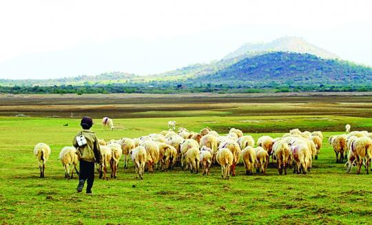 Có một đồng cừu còn đẹp hơn cả… MV của Đen Vâu - Ảnh 1.