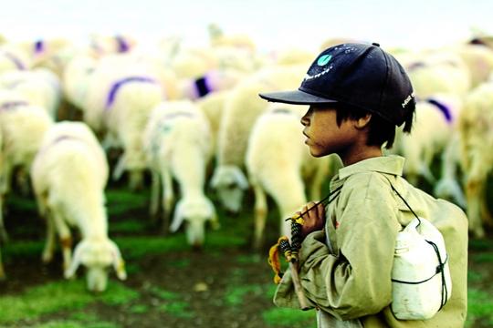 Có một đồng cừu còn đẹp hơn cả… MV của Đen Vâu - Ảnh 2.
