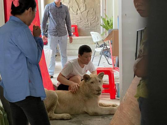 Cái kết của người Trung Quốc khoe thú cưng sư tử trên TikTok - Ảnh 2.