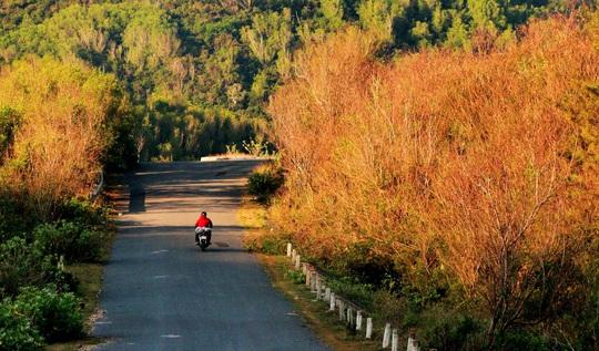 Thức dậy ở miền nắng đẹp Phú Yên - Ảnh 3.