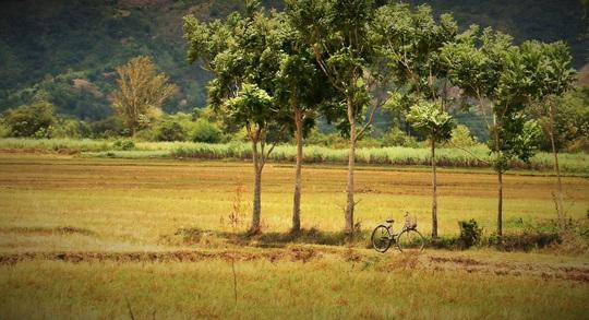 Thức dậy ở miền nắng đẹp Phú Yên - Ảnh 4.