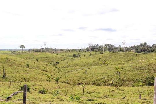 Dòng sông nước sôi 97 độ C trong rừng mưa Amazon - Ảnh 8.