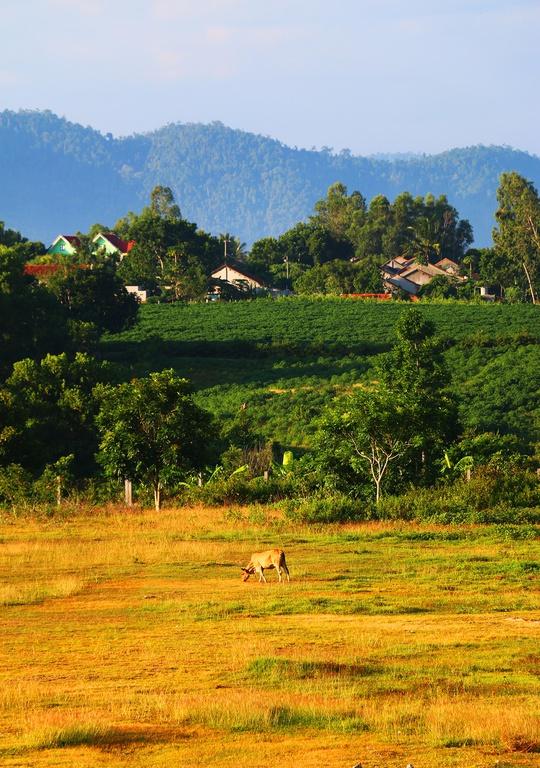 Thức dậy ở miền nắng đẹp Phú Yên - Ảnh 10.