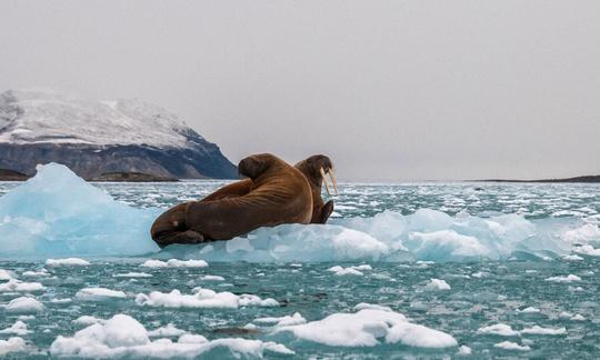 Ngắm hải mã vùng băng giá - Ảnh 2.
