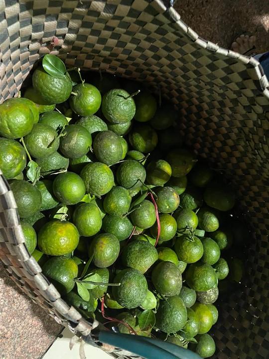 Tỉnh Sóc Trăng gửi 60 tấn nông sản hỗ trợ công nhân TP HCM chống dịch - Ảnh 3.
