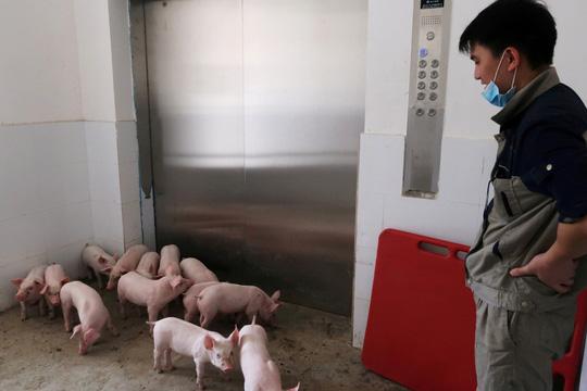 Trung Quốc xây khách sạn heo 13 tầng để ngăn dịch bệnh - Ảnh 2.