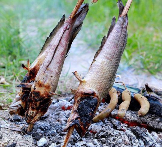 Loạt món ngon từ cá lóc ở miền Tây - Ảnh 1.