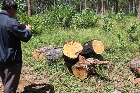 Lâm Đồng: Lấn chiếm đất rừng còn hành hung đoàn kiểm tra - Ảnh 6.