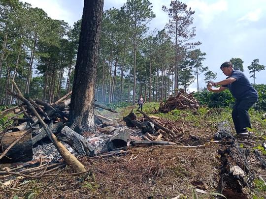 Lâm Đồng: Lấn chiếm đất rừng còn hành hung đoàn kiểm tra - Ảnh 2.