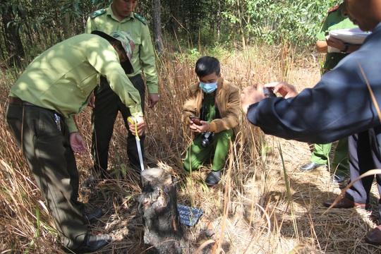 Lâm Đồng: Lấn chiếm đất rừng còn hành hung đoàn kiểm tra - Ảnh 9.