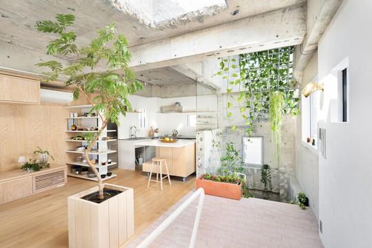Căn nhà dành riêng cầu thang cho cây xanh - Ảnh 1.