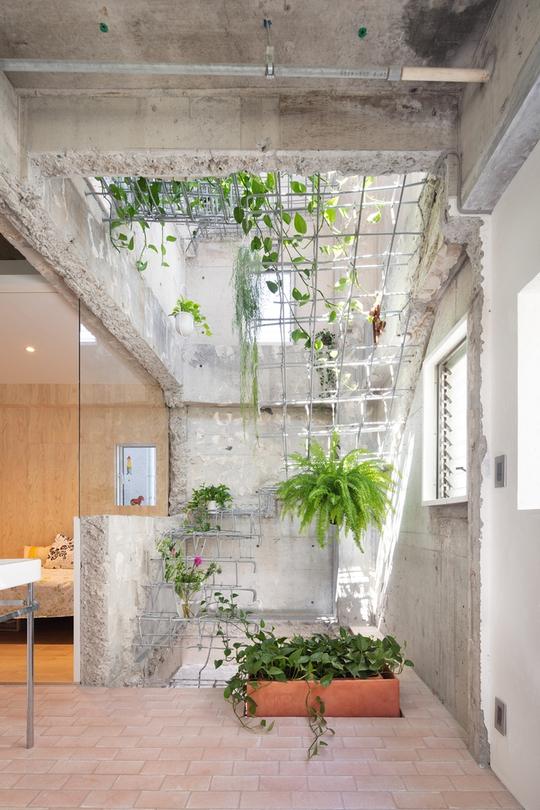 Căn nhà dành riêng cầu thang cho cây xanh - Ảnh 3.