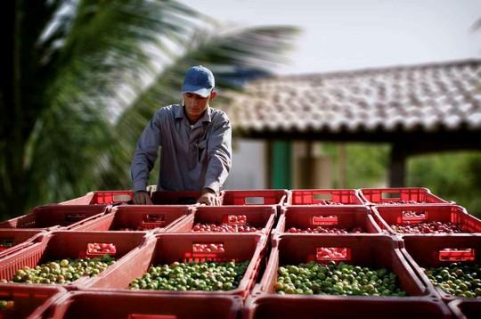 Nông trại hữu cơ làm nên sản phẩm Amway chất lượng - Ảnh 2.