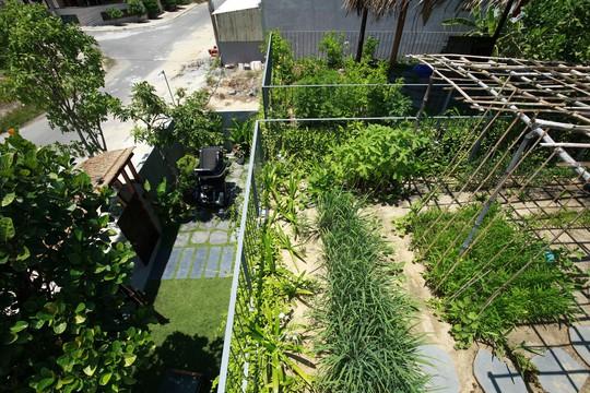 Ngôi nhà đa năng với mái tranh, cây xanh phủ kín ở Quảng Nam - Ảnh 8.
