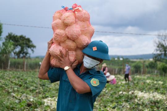 6.000 tấn rau sạch từ Lâm Đồng chuyển tặng TP HCM - Ảnh 2.