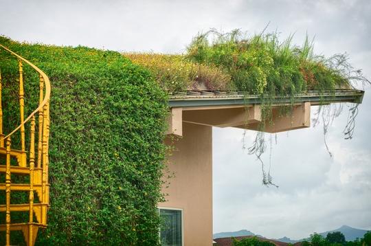 Căn nhà có cánh đồng hoa trên mái - Ảnh 6.