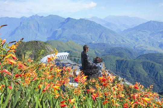 Hoa nở rực rỡ trên đường lên đỉnh Fansipan - Ảnh 2.