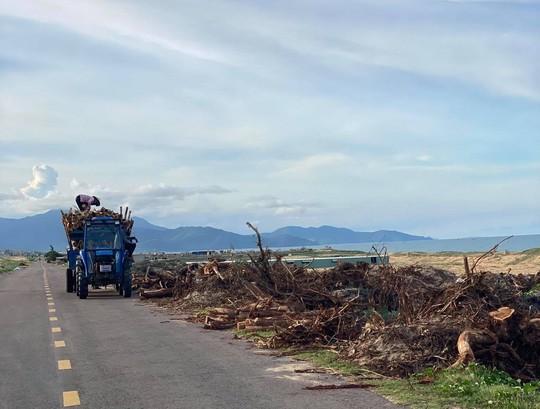 Bất thường trong báo cáo vụ phá 5,26 ha rừng phòng hộ ven biển Bình Định - Ảnh 2.