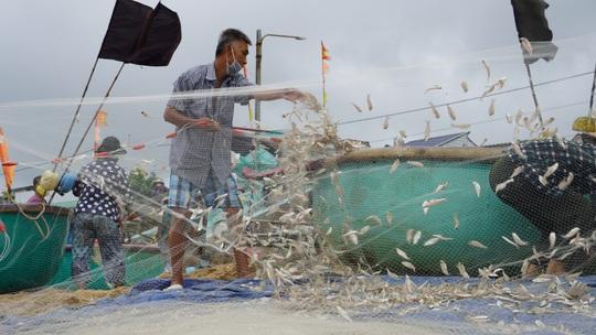 Ngư dân Bà Rịa- Vũng Tàu vỡ òa khi cá, tôm đầy thuyền trong ngày đầu mở biển - Ảnh 9.