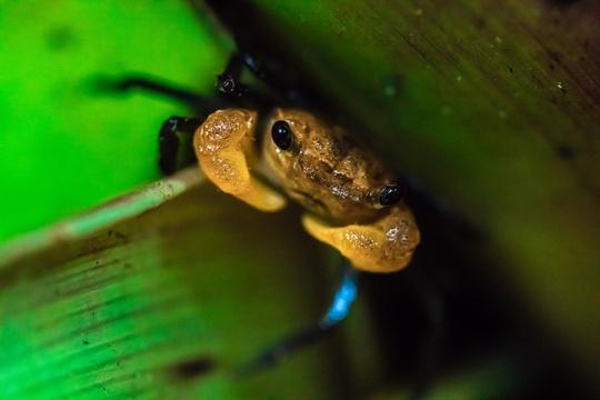 Khu bảo tồn có rừng nhiệt đới triệu năm tuổi ở Malaysia - Ảnh 6.