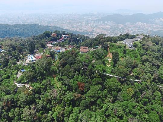 Khu bảo tồn có rừng nhiệt đới triệu năm tuổi ở Malaysia - Ảnh 2.