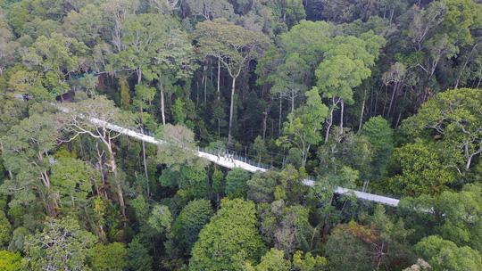 Khu bảo tồn có rừng nhiệt đới triệu năm tuổi ở Malaysia - Ảnh 5.