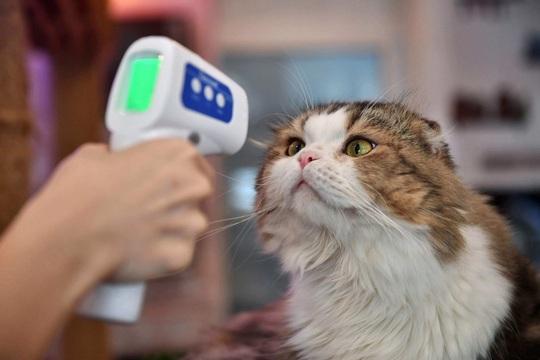 Virus SARS-CoV-2 có lây từ chó, mèo sang người không? - Ảnh 1.