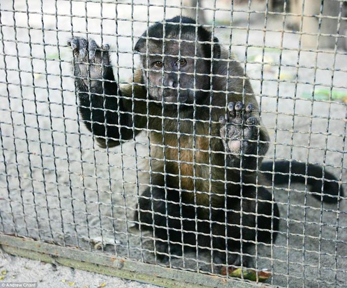 Gương mặt tội nghiệp của chú khỉ