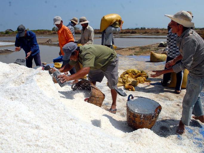Nhà nhà tại xã Lý Nhơn đang vào mùa thu hoach muối. Từ nghề này mà đời sống của bà con ngày càng khấm khá hơn.