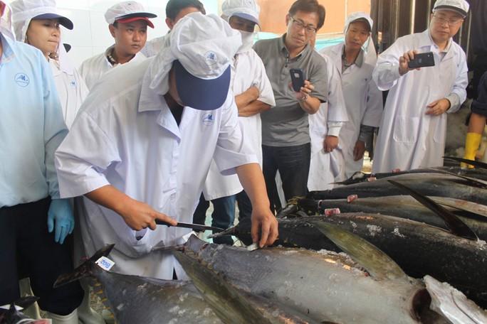 Cá ngừ nhập khẩu bị ách tại cảng, doanh nghiệp điêu đứng - Ảnh 1.