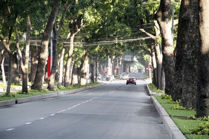 Đường Tôn Đức Thắng (quận 1) sẽ có 84 cây cổ thụ bị đốn hạ và 37 cây được di dời trên tổng số 260 cây cổ thụ có tuổi đời hàng trăm năm trên tuyến đường này.