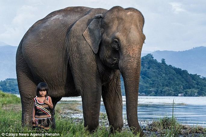 Cô bé Việt Nam kết thân với voi lọt ống kính nhiếp ảnh gia Pháp