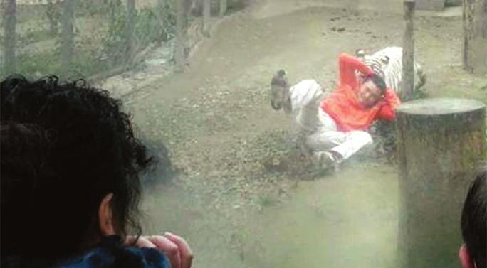 Anh chàng nghịch dại bị hổ kéo lê trên mặt đất nhưng may mắn không chết. Ảnh: Shanghaiist