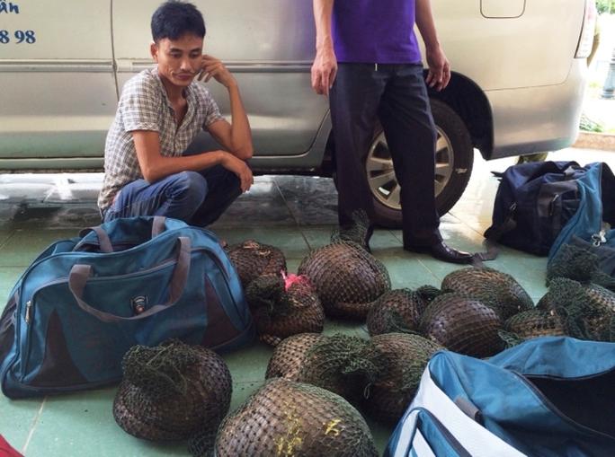 Số cá thể tê được phát hiện trên chiếc xe taxi của hãng taxi Vạn Xuân