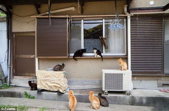 Breaking and entering:  It looks like this pack of cats is up to no good, trying to get into a locals house