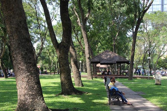 Ngoài số cổ thụ ở đường Tôn Đức Thắng, dự kiến năm 2015 sẽ có thêm 57 cây xanh đoạn từ Công viên 23-9 khu A đến chợ Bến Thành bị đốn hạ để khởi công nhà ga Metro trung tâm Bến Thành.