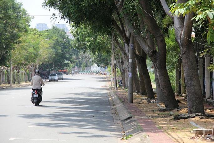 Mới đây Khu Quản lý giao thông đô thị số 2 thuộc Sở GTVT TP còn đề nghị đốn bỏ 215 cây sọ khỉ trên đường Nguyễn Văn Hưởng, quận 2 để để mở rộng đường